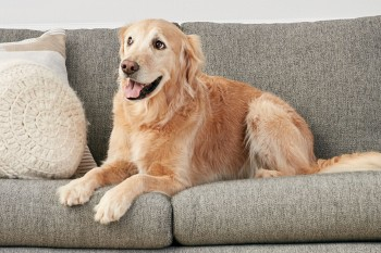 Furniture Choices for Cat and Dog Owners