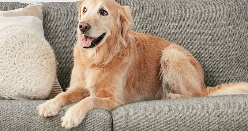 Furniture Upholstery Choices for Cat and Dog Owners