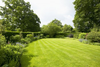 Foster A Great Lawn