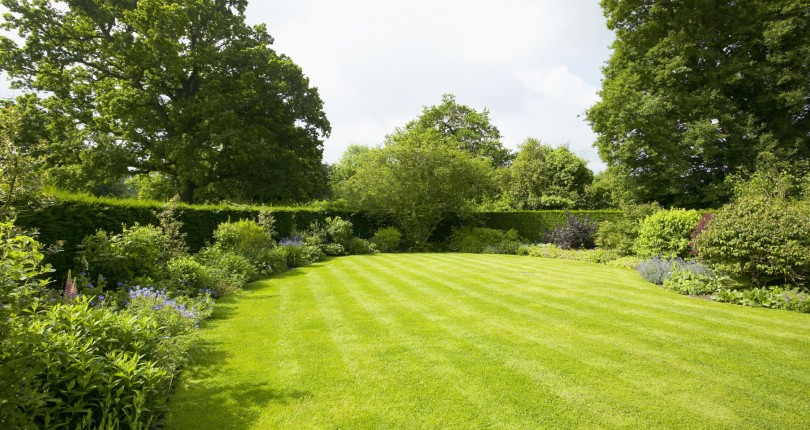 8 Spring Tasks to Foster a Great Lawn